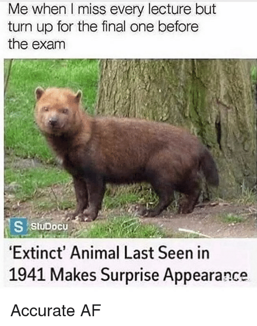 Af, Memes, and Turn Up: Me when Il miss every lecture but  turn up for the final one before  the exanm  Extinct' Animal Last Seen in  1941 Makes Surprise Appearance Accurate AF