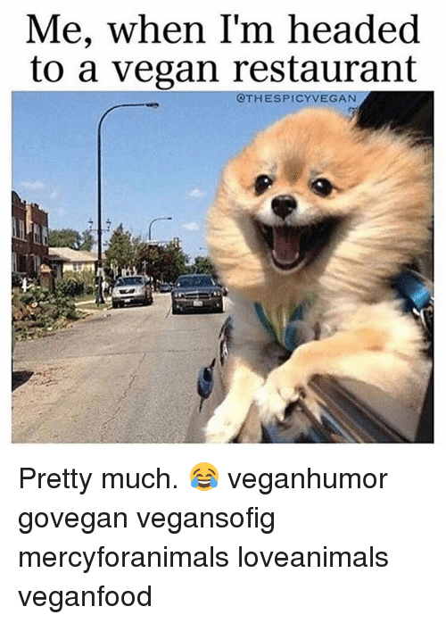 Memes, Vegan, and Restaurant: Me, when I'm headed  to a vegan restaurant  OTHESPICY VEGAN Pretty much. 😂 veganhumor govegan vegansofig mercyforanimals loveanimals veganfood