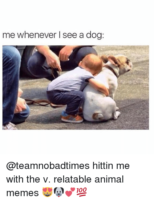 Memes, Animal, and Relatable: me whenever I see a dog: @teamnobadtimes hittin me with the v. relatable animal memes 😻🐶💕💯