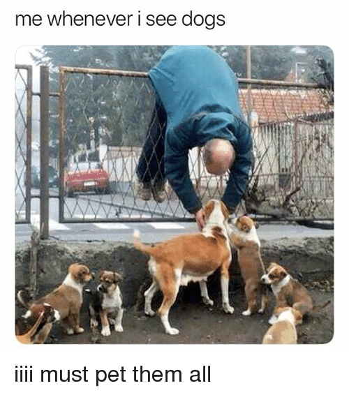 Dogs, Memes, and 🤖: me whenever i see dogs iiii must pet them all