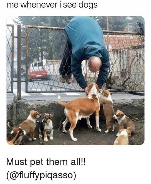 Dogs, Memes, and 🤖: me whenever i see dogs Must pet them all!! (@fluffypiqasso)