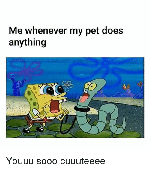 Memes, 🤖, and Pet: Me whenever my pet does  anything Youuu sooo cuuuteeee
