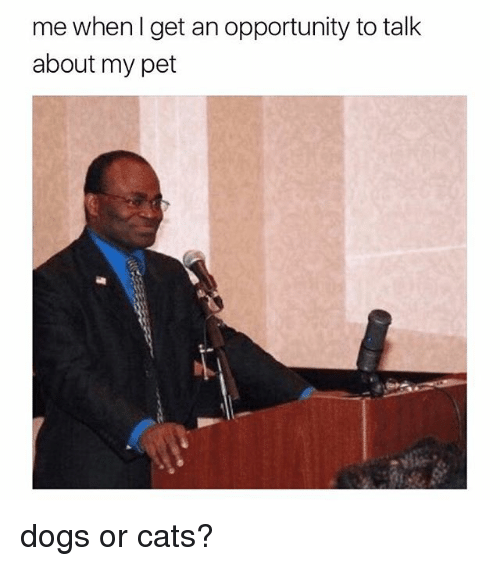Cats, Dogs, and Opportunity: me whenl get an opportunity to talk  about my pet dogs or cats?