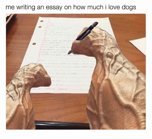 writing an essay on how much i love dogs dogs meon me dogs love and how writing an essay on how much i love