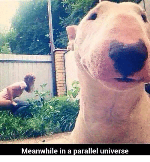 Mexican Word of the Day, Parallels, and Meanwhile in a Parallel Universe: Meanwhile in a parallel universe