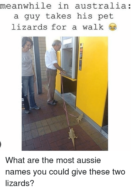 Memes, Australia, and Aussie: meanwhile in australia:  a guy takes his pet  lizards for a walk What are the most aussie names you could give these two lizards?