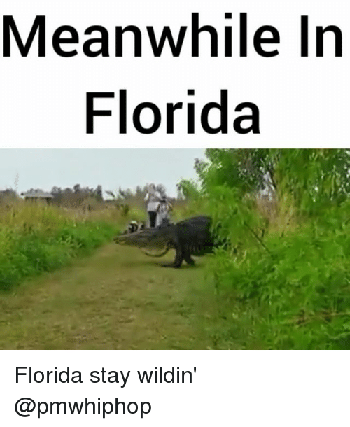 meanwhile in florida florida stay wildin pmwhiphop 12189609 ✅ 25 best memes about meanwhile in florida meanwhile in