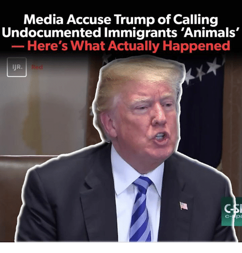 Animals, Memes, and Trump: Media Accuse Trump of Calling  Undocumented Immigrants 'Animals'  Here's What Actually Happened  JR.  Bu