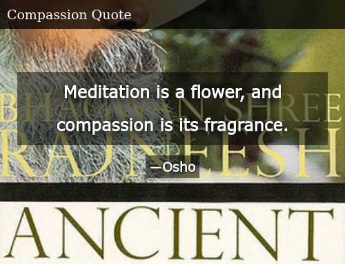 Meditation Is a Flower and Compassion Is Its Fragrance