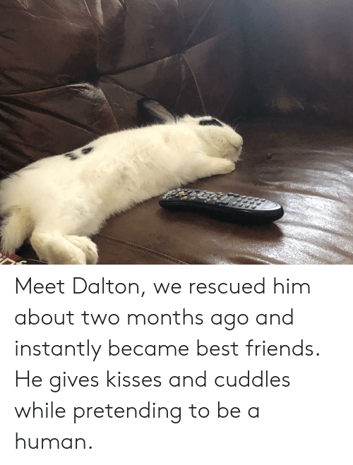 Friends, Best, and Best Friends: Meet Dalton, we rescued him about two months ago and instantly became best friends. He gives kisses and cuddles while pretending to be a human.