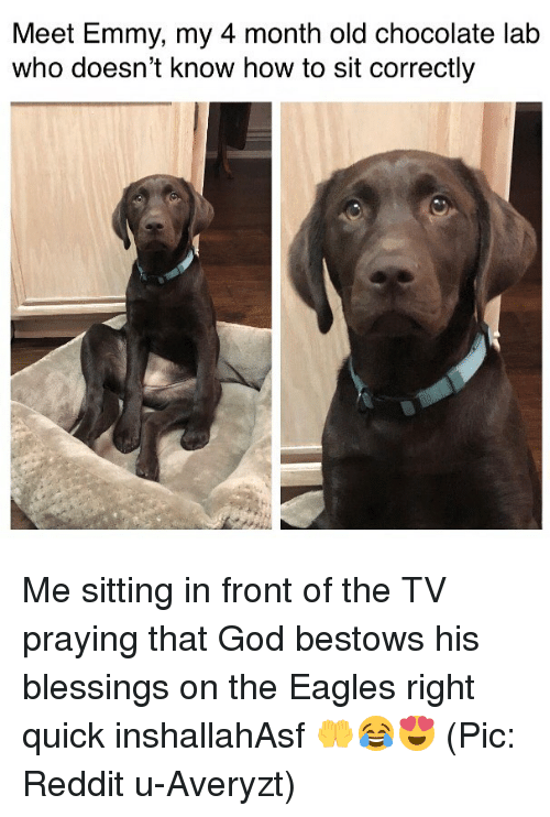 Philadelphia Eagles, God, and Memes: Meet Emmy, my 4 month old chocolate lab  who doesn't know how to sit correctly Me sitting in front of the TV praying that God bestows his blessings on the Eagles right quick inshallahAsf 🤲😂😍 (Pic: Reddit u-Averyzt)