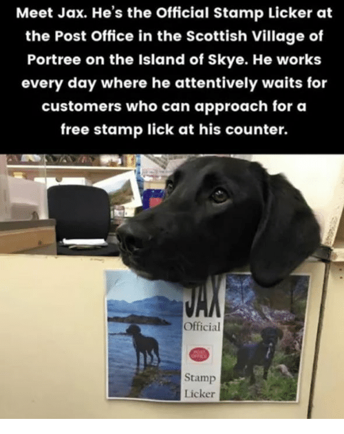 Dank, Post Office, and Free: Meet Jax. He's the Official Stamp Licker at  the Post Office in the Scottish Village of  Portree on the Island of Skye. He works  every day where he attentively waits for  customers who can approach for a  free stamp lick at his counter.  Official  Stamp  Licker