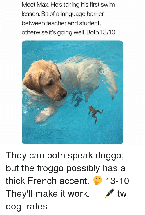 Funny, Teacher, and Work: Meet Max. He's taking his first swim  lesson. Bit of a language barrier  between teacher and student  otherwise it's going well. Both 13/10 They can both speak doggo, but the froggo possibly has a thick French accent. 🤔 13-10 They'll make it work. - - 🖊 tw-dog_rates