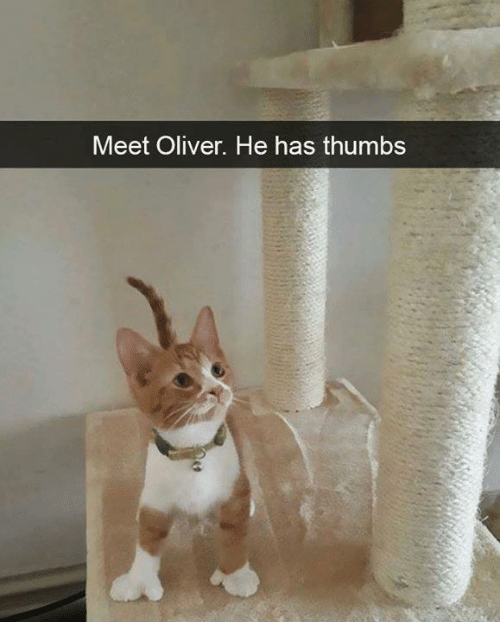 Memes, 🤖, and Thumbs: Meet Oliver. He has thumbs