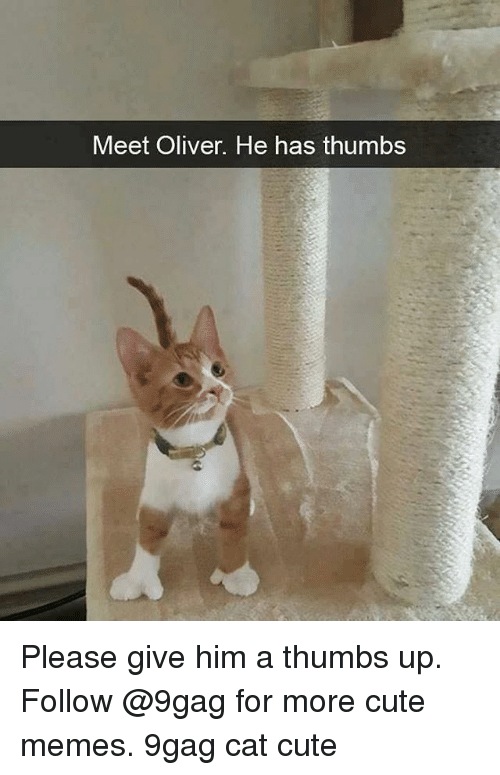 9gag, Cute, and Memes: Meet Oliver. He has thumbs Please give him a thumbs up. Follow @9gag for more cute memes. 9gag cat cute