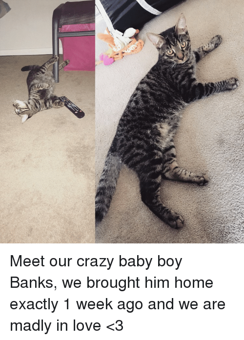 Crazy, Love, and Banks