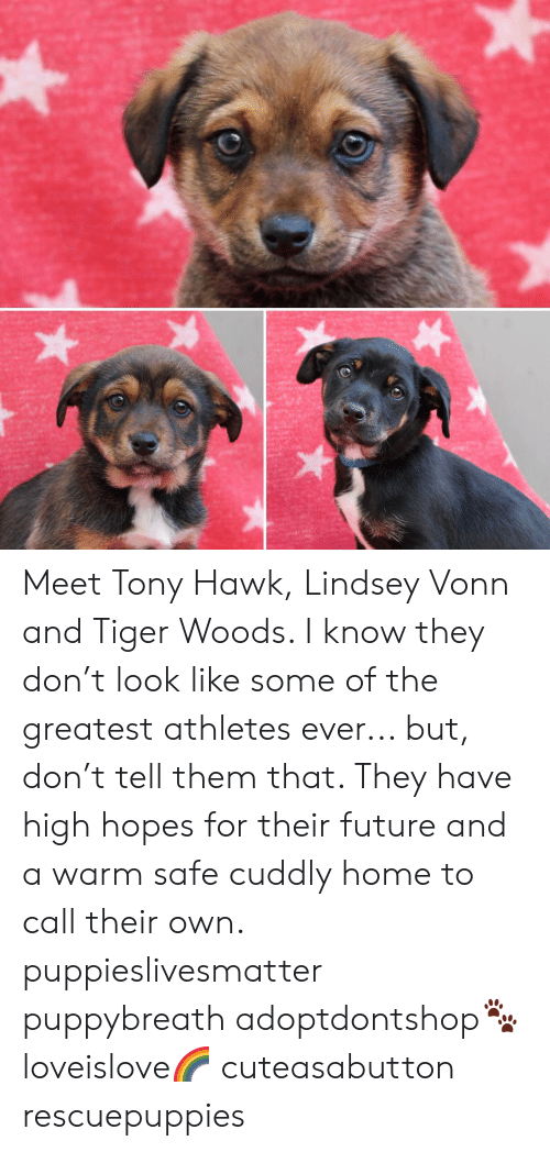 Meet Tony Hawk Lindsey Vonn And Tiger Woods I Know They Dont Look