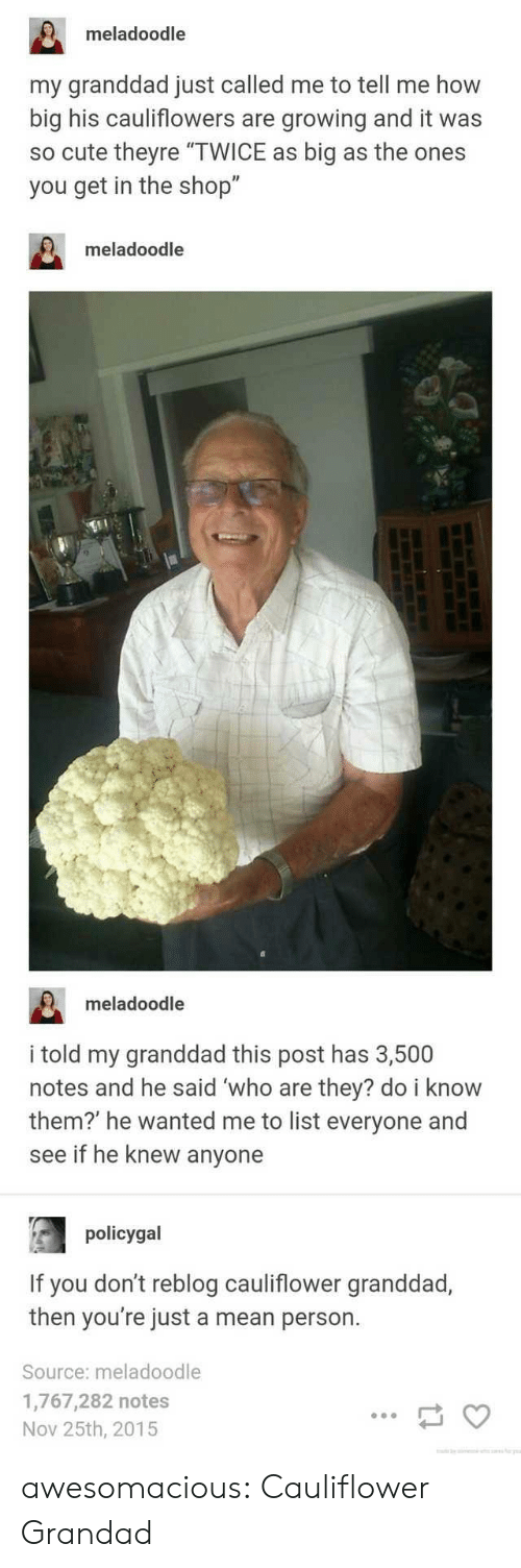 "Cute, Tumblr, and Blog: meladoodle  my granddad just called me to tell me how  big his cauliflowers are growing and it was  so cute theyre ""TWICE as big as the ones  you get in the shop""  meladoodle  meladoodle  i told my granddad this post has 3,500  notes and he said 'who are they? do i know  them?' he wanted me to list everyone and  see if he knew anyone  policygal  If you don't reblog cauliflower granddad,  then you're just a mean person.  Source: meladoodle  1,767,282 notes  Nov 25th, 2015 awesomacious:  Cauliflower Grandad"