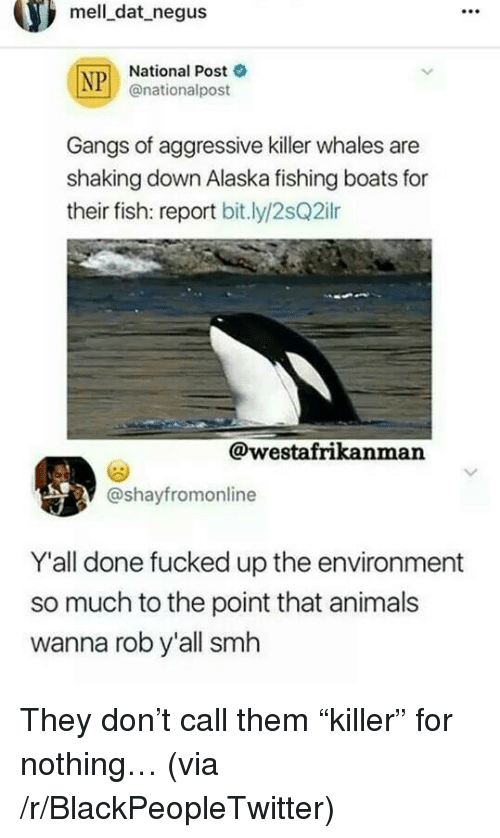 """Animals, Blackpeopletwitter, and Killer Whales: mell dat negus  National Post  @nationalpost  Gangs of aggressive killer whales are  shaking down Alaska fishing boats for  their fish: report bitly/2sQ2ilr  @westafrikanman  @shayfromonline  Y'all done fucked up the environment  so much to the point that animals  wanna rob y'all smh <p>They don't call them """"killer"""" for nothing… (via /r/BlackPeopleTwitter)</p>"""