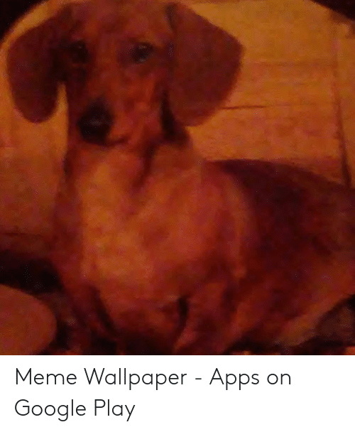 Meme Wallpaper - Apps on Google Play | Google Meme on ME ME