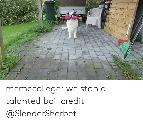 Stan, Tumblr, and Twitter: memecollege: we stan a talanted boi   credit @SlenderSherbet