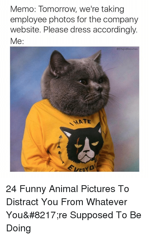 Funny, Animal, and Dress: Memo: Tomorrow, we're taking  employee photos for the company  website. Please dress accordingly.  Me:  @StupidResumes  HATE 24 Funny Animal Pictures To Distract You From Whatever You're Supposed To Be Doing