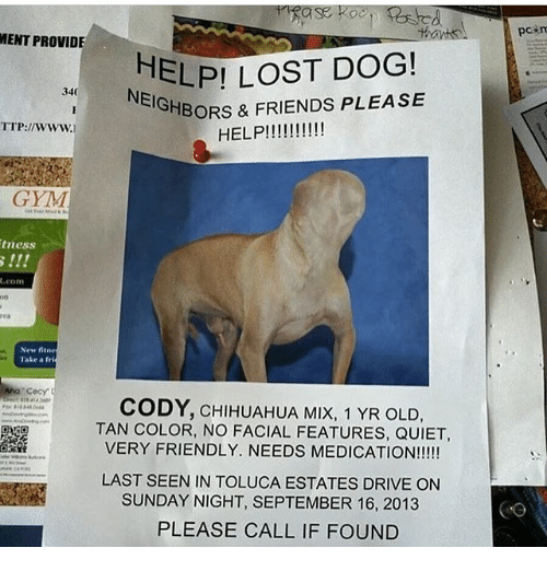 lost dog meme