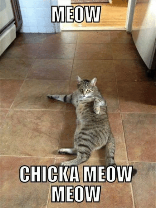 meow chicka meow meow 6599731 ✅ 25 best memes about meow meow meow meow memes,Meow Meme