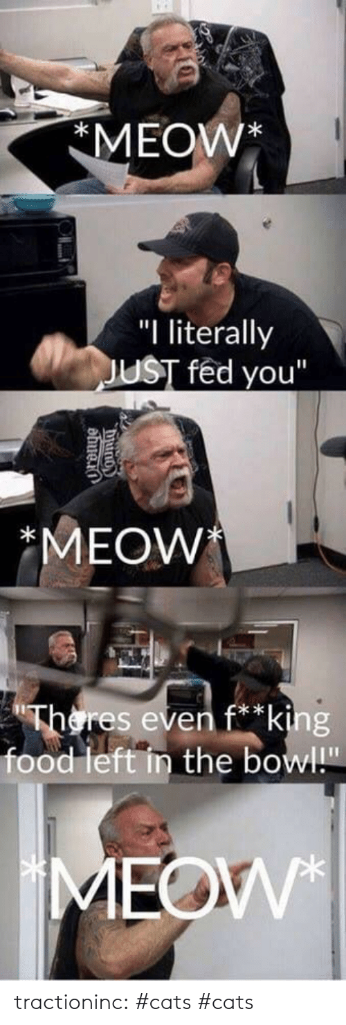 "Cats, Food, and Tumblr: MEOW*  ""I literally  JUST fed you""  *MEOW  Theres even f*king  food left in the bowl!""  MEOW  County tractioninc:  #cats  #cats"