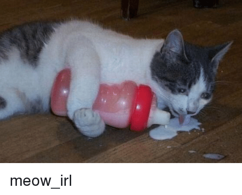 Irl, Cat IRL, and Meow: meow_irl