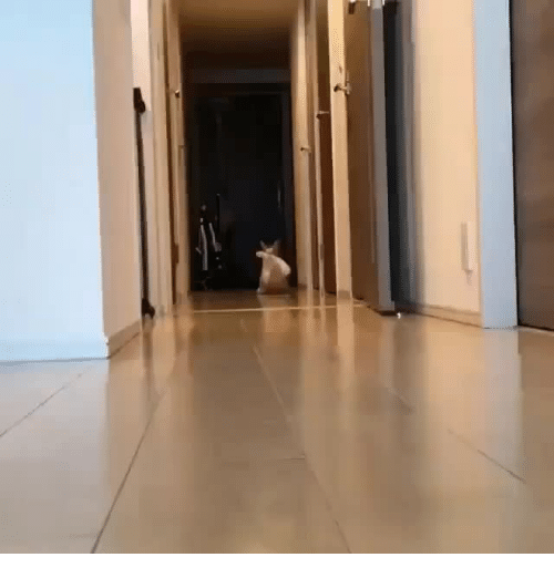 Irl, Cat IRL, and Meow: Meow irl