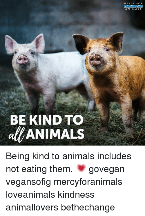 Animals, Memes, and Kindness: MERCY FOR  A N I M ALS  BE KIND TO  alfANIMALS Being kind to animals includes not eating them. 💗 govegan vegansofig mercyforanimals loveanimals kindness animallovers bethechange