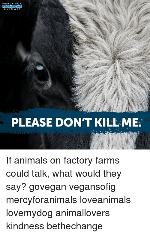Animals, Memes, and Kindness: MERCY FOR  A NIM ALS  PLEASE DON'T KILL ME If animals on factory farms could talk, what would they say? govegan vegansofig mercyforanimals loveanimals lovemydog animallovers kindness bethechange