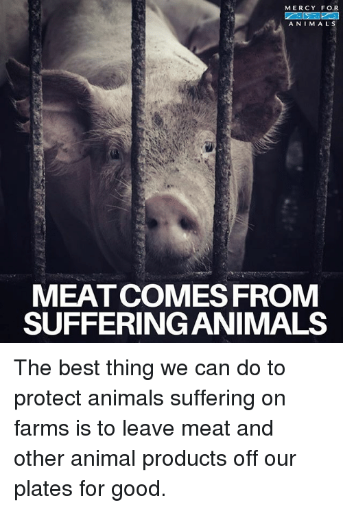 Animals, Memes, and Animal: MERCY FOR  A NIMALS  MEATCOMES FROM  SUFFERING ANIMALS The best thing we can do to protect animals suffering on farms is to leave meat and other animal products off our plates for good.