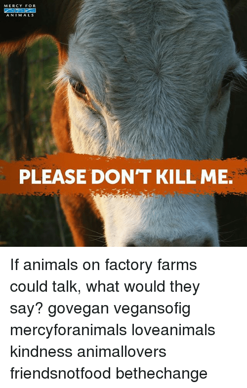 Animals, Memes, and Kindness: MERCY FOR  A NIMALS  PLEASE DON'T KILL ME. If animals on factory farms could talk, what would they say? govegan vegansofig mercyforanimals loveanimals kindness animallovers friendsnotfood bethechange