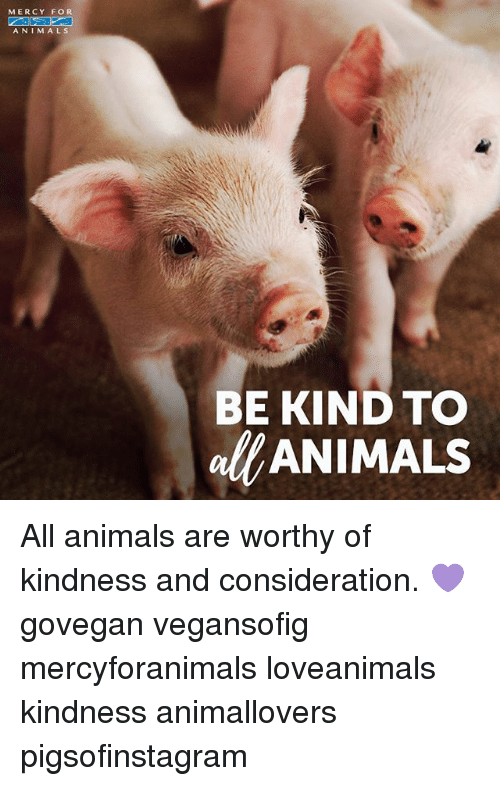 Animals, Memes, and Kindness: MERCY FOR  ANIMALS  BE KIND TO  alANIMALS All animals are worthy of kindness and consideration. 💜 govegan vegansofig mercyforanimals loveanimals kindness animallovers pigsofinstagram