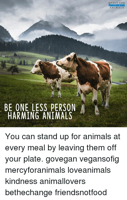 Animals, Memes, and Kindness: MERCY FOR  ANIMALS  BE ONE LESS PERSON  HARMING ANIMALS You can stand up for animals at every meal by leaving them off your plate. govegan vegansofig mercyforanimals loveanimals kindness animallovers bethechange friendsnotfood