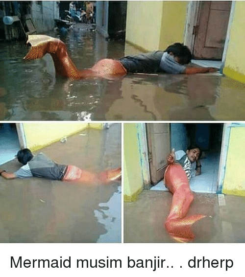 Memes, 🤖, and Mermaid: Mermaid musim banjir.. . drherp