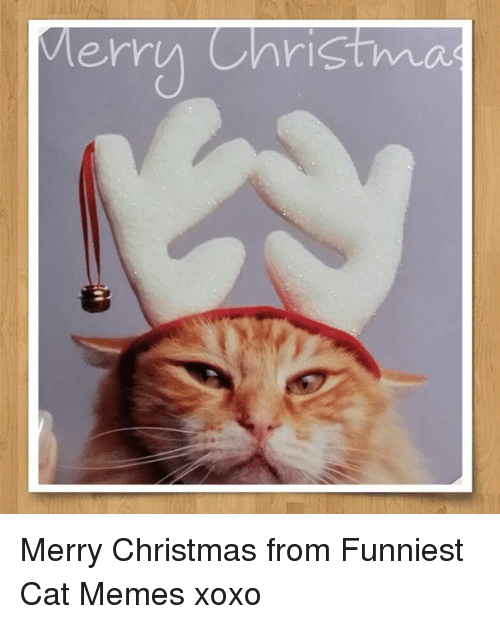Christmas Memes Cats.Merry Christma Merry Christmas From Funniest Cat Memes Xoxo