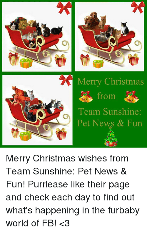 Merry Christmas Wishes Funny.Merry Christmas From Team Sunshine Pet News Fun Merry