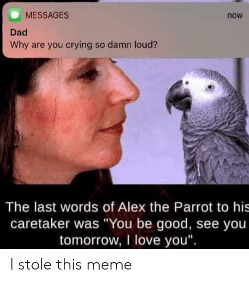 """Crying, Dad, and Love: MESSAGES  Dad  Why are you crying so damn loud?  now  The last words of Alex the Parrot to his  caretaker was """"You be good, see you  tomorrow, I love you"""". I stole this meme"""