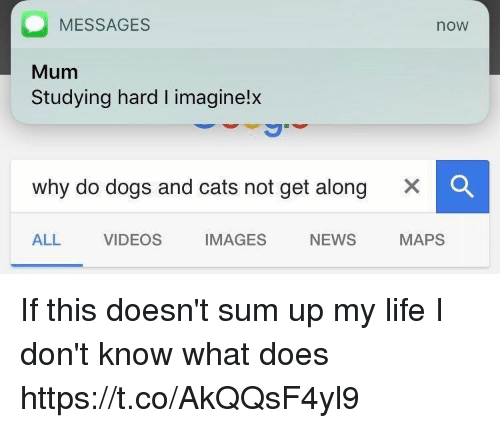 Messages Mum Studying Hard I Imaginelx Now Why Do Dogs And Cats Not