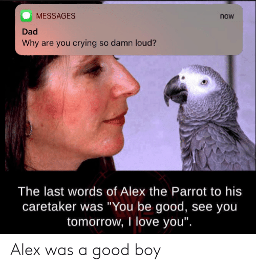 "Crying, Dad, and Love: MESSAGES  now  Dad  Why are you crying so damn loud?  The last words of Alex the Parrot to his  caretaker was ""You be good, see yoiu  tomorrow, I love you"". Alex was a good boy"