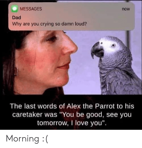 "Crying, Dad, and Love: MESSAGES  now  Dad  Why are you crying so damn loud?  The last words of Alex the Parrot to his  caretaker was ""You be good, see you  tomorrow, I love you Morning :("