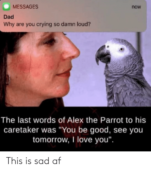 """Af, Crying, and Dad: MESSAGES  now  Dad  Why are you crying so damn loud?  The last words of Alex the Parrot to his  caretaker was """"You be good, see you  tomorrow, I love you"""". This is sad af"""