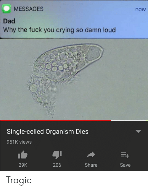 Crying, Dad, and Memes: MESSAGES  now  Dad  Why the fuck you crying so damn loud  Single-celled Organism Dies  951K views  29K  206  Share  Save Tragic