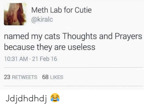 Cats, Meth, and They: Meth Lab for Cutie  @kiralc  named my cats Thoughts and Prayers  because they are useless  10:31 AM 21 Feb 16  23 RETWEETS 68 LIKES Jdjdhdhdj 😂