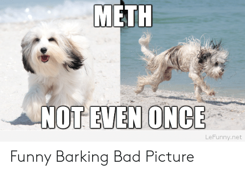 Bad, Funny, and Net: METH  NOT EVEN ONCE  LeFunny.net Funny Barking Bad Picture