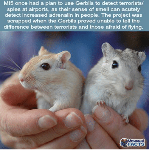 MI5 Once Had a Plan to Use Gerbils to Detect Terrorists