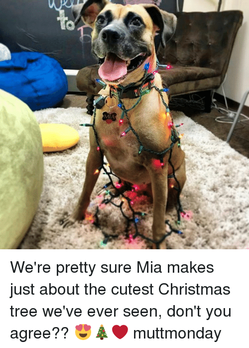 Memes, Christmas Tree, and Trees: MIA We're pretty sure Mia makes just about the cutest Christmas tree we've ever seen, don't you agree?? 😍🎄❤ muttmonday